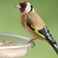 Hrana za ptice